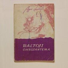 Baltoji chrizantema